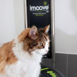 Formation : imoove-vet | Le soin par le mouvement élisphérique, pour Vétérinaires et ASV