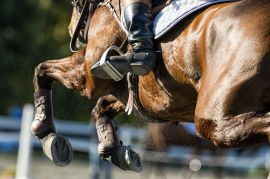 Radiofrequency as a tool to reduce fatigue and improve athletic performance in the horse