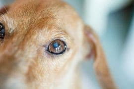 MLS® Laser Therapy & Magnetotherapy QS Vet Benefits and clinical experiences.
